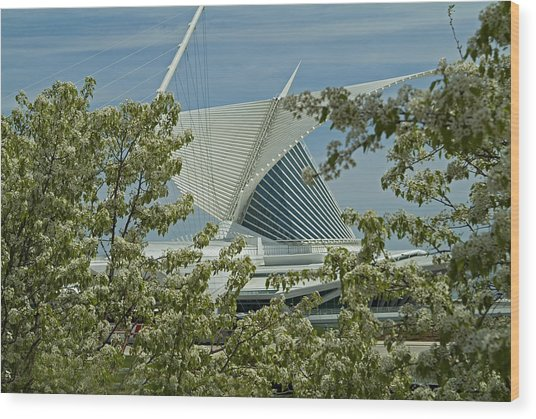 Milwaukee Art Museum Through Flowered Trees Wood Print by Devinder Sangha