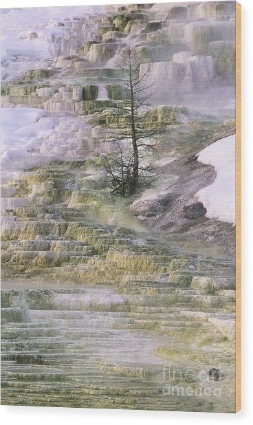 Minerva Springs Terraces Yellowstone National Park Wood Print
