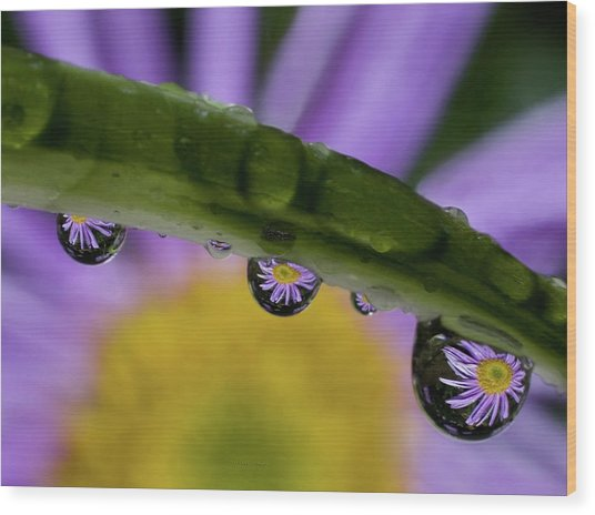 Mini Asters Wood Print