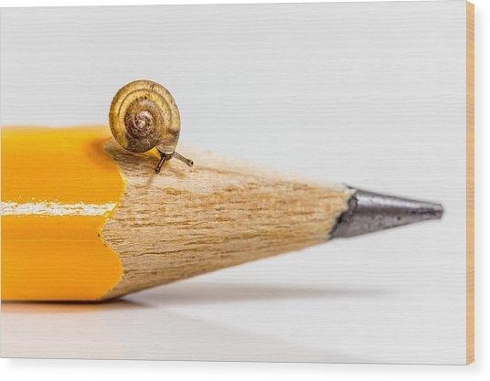 Mini Snail. Wood Print