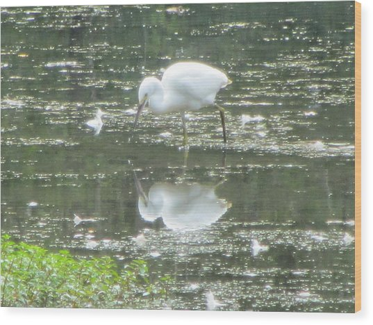 Mirror Image Of The Snowy Egret Wood Print by Debbie Nester