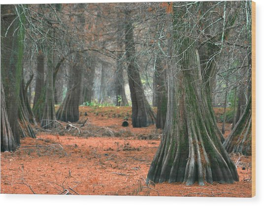 Mississippi Cypress Wood Print