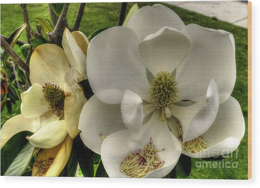 Mississippi Magnolia Wood Print