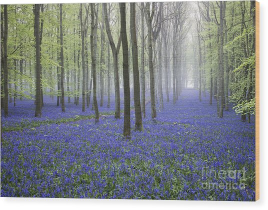 Misty Dawn Bluebell Wood Wood Print