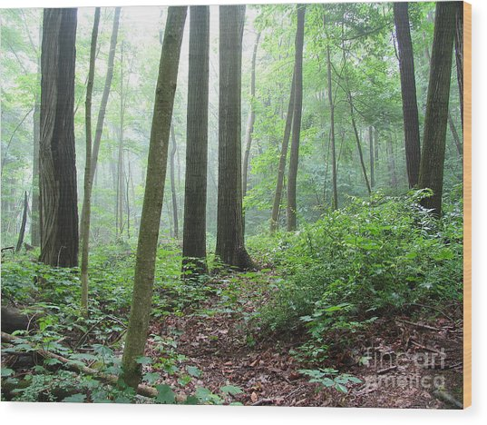 Misty Deep Forest Wood Print