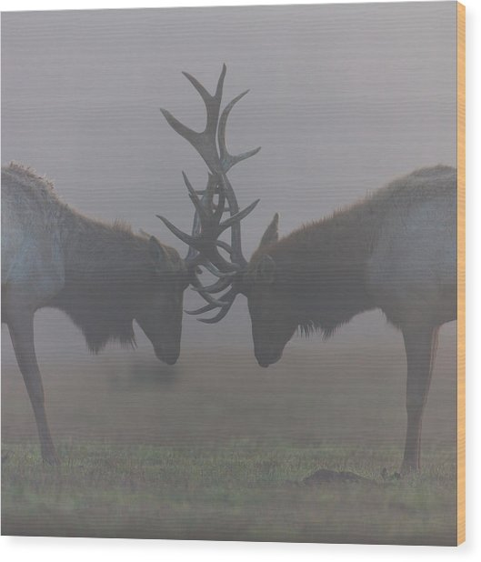Misty Encounter Wood Print