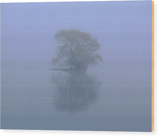 Misty Morning At Jamaica Pond Wood Print