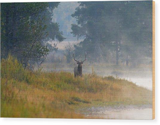 Misty Morning Elk Wood Print