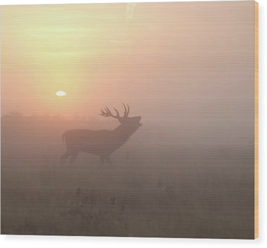 Misty Morning Stag Wood Print
