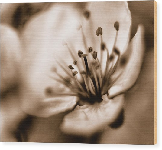 Misty Plumb Blossom Wood Print