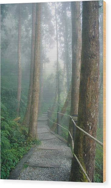 Misty Trail Wood Print