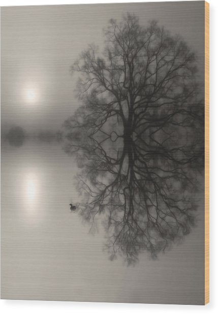 Misty Water Oak Wood Print