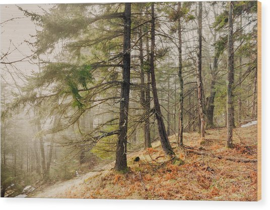 Misty Woodland Wood Print by Robert Clifford