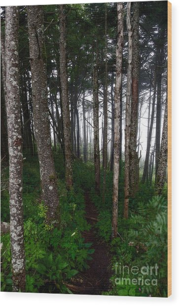 Misty Woods At Mt. Mitchell Wood Print