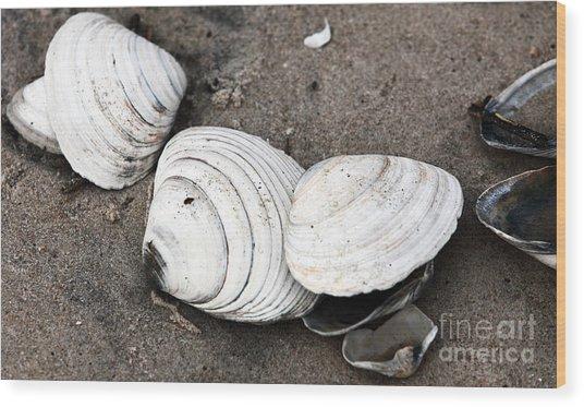 Mixed Shells Wood Print by John Rizzuto