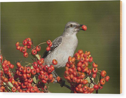 Mockingbird In Berries Wood Print