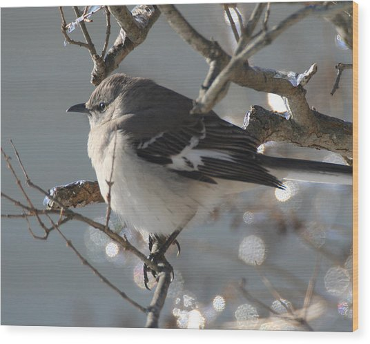 Mockingbird In Winter Wood Print