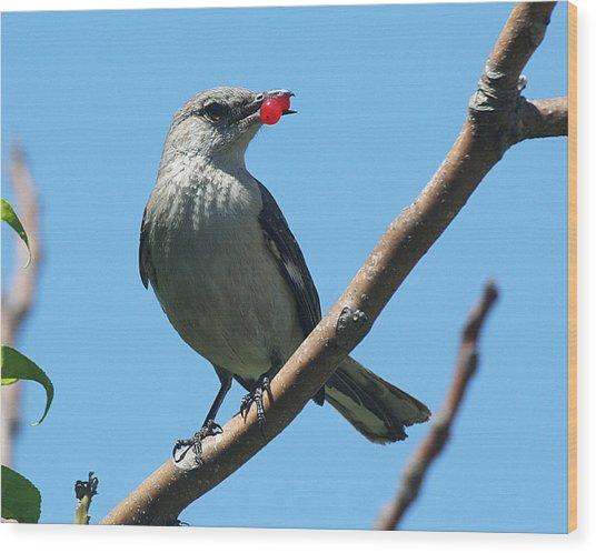 Mockingbird With Berries Wood Print