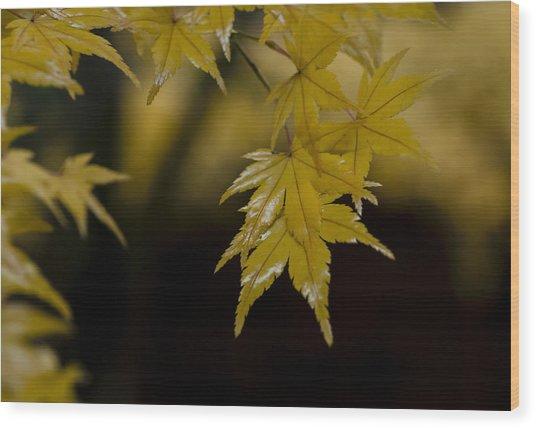 Moist Yellow Wood Print