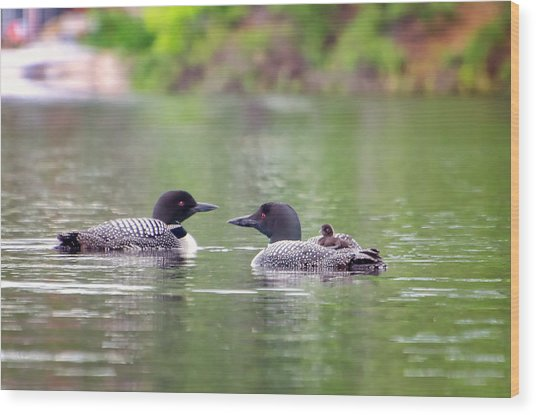 Mom And Dad Loon With Baby On Back Wood Print