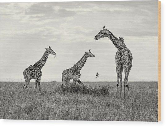 Mom And Twin Giraffes Wood Print