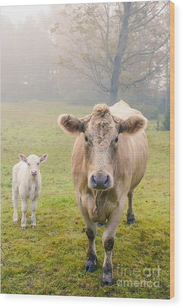Momma And Baby Cow Wood Print