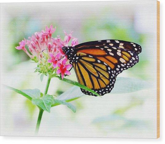 Monarch Beauty Wood Print by Jim  Darnall