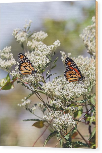 Monarch Beauty Wood Print