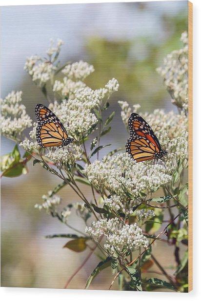 Monarch Butterflies On Milkweed Wood Print