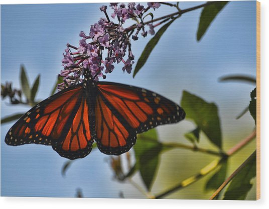 Monarch Butterfly #1 Wood Print