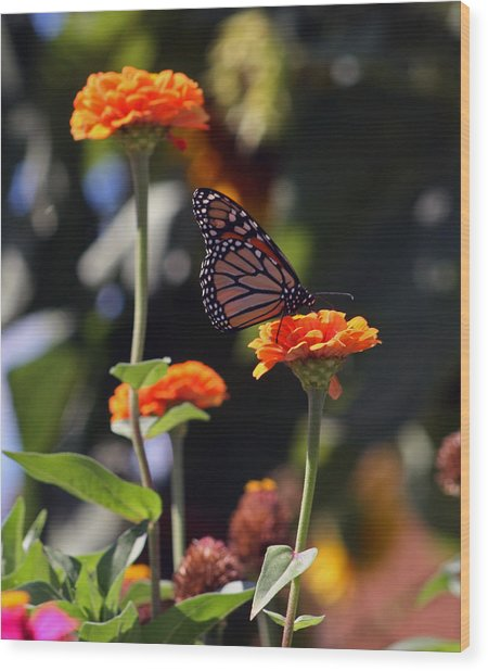 Monarch Butterfly And Orange Zinnias Wood Print