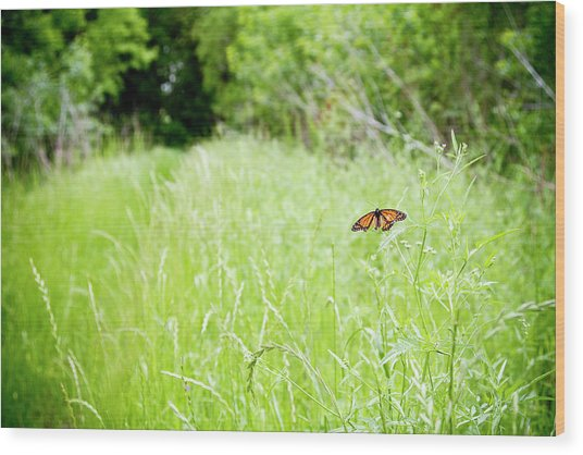 Monarch Butterfly In Green Field Wood Print by Thorpeland Photography