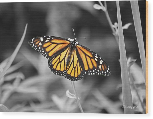 Monarch In Its Glory Wood Print