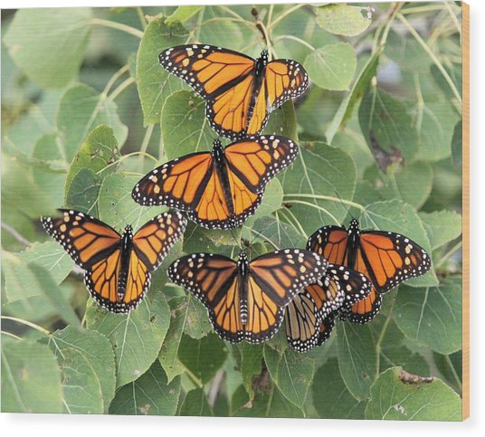 Monarch Migration Wood Print