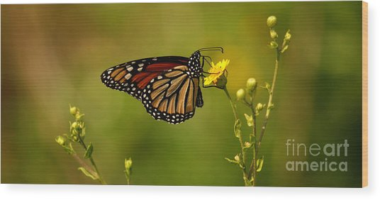 Monarch Moment Wood Print