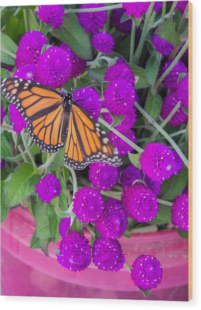 Monarch On Bachelor Buttons Wood Print