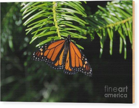 Monarch On Evergreen Wood Print