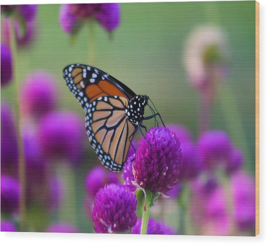 Monarch On Purple Flowers Wood Print