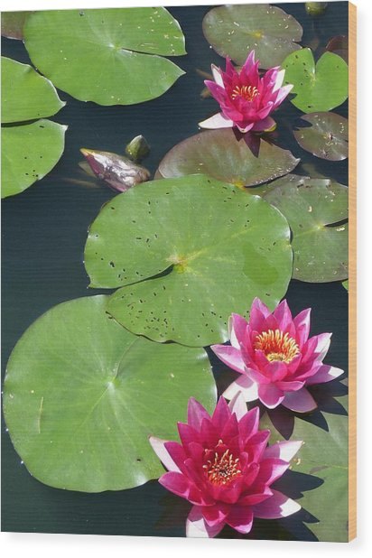 Monet's Waterlilies IIi Wood Print