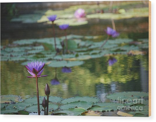 Monet's Waterlily Pond Number Two Wood Print