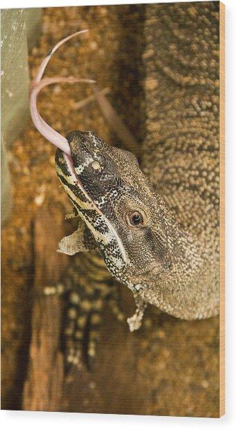 Monitor Lizard Wood Print by Debbie Cundy