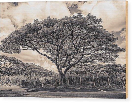 Monkey Pod Tree Wood Print