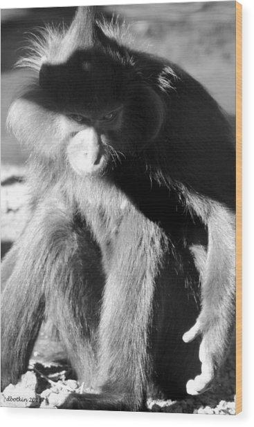 Monkey See Monkey Do Wood Print by Dick Botkin