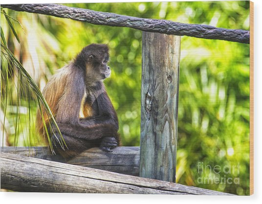 Monkey Sitting Wood Print by Stephanie Hayes