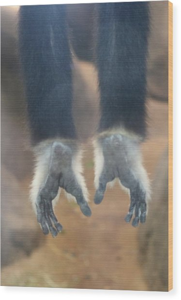 Monkeying Around  Wood Print