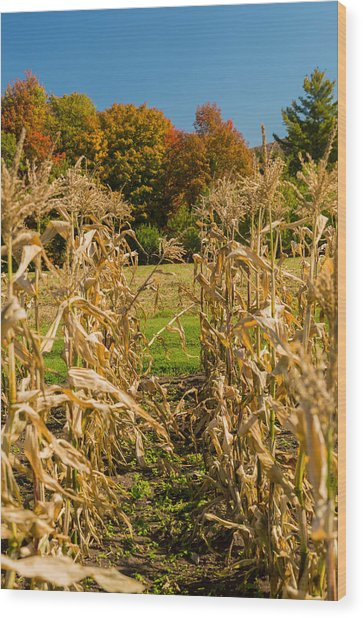 Monks Fall Corn Field Wood Print
