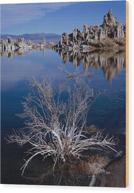 Mono Lake Salt Bush Wood Print