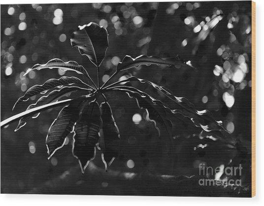 Monochrome Leaf  Wood Print