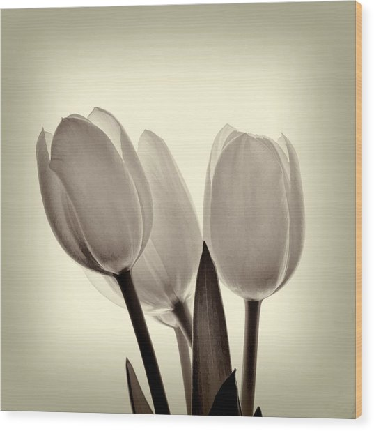 Monochrome Tulips With Vignette Wood Print