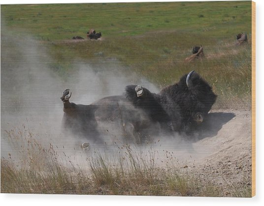 Montana Bison 1 Wood Print by T C Brown